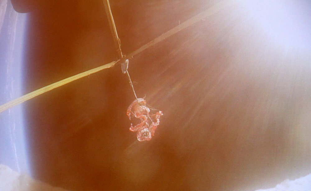 parachute-ldsd-1a