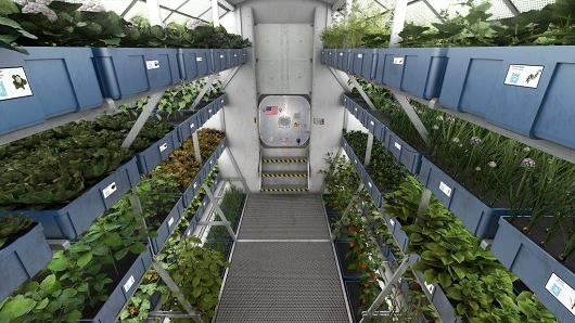 103969706-mock_up_space_greenhouse-530x298