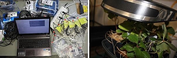 16-10-26-heathers-plants-experiment-montage